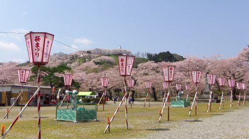 桜2012船岡城跡公園5