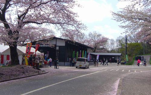 桜2012船岡城跡公園6さくらの里