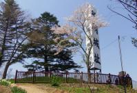 桜2012船岡城跡公園8展望デッキ