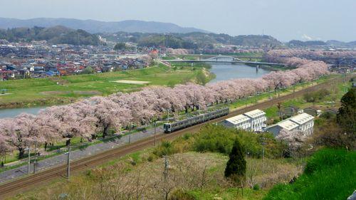 桜2012船岡城跡公園9展望デッキ