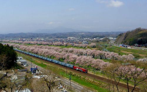 桜2012船岡城跡公園10展望デッキ