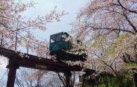 桜2012船岡城跡公園13スロープカー