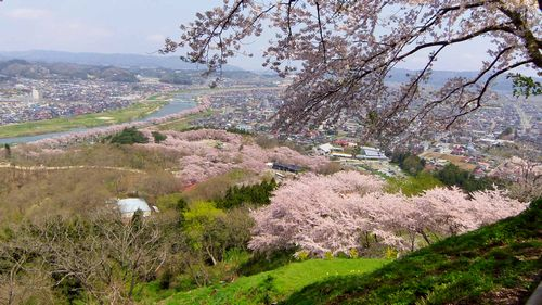桜2012船岡城跡公園16頂上