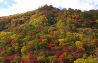紅葉2012泉ヶ岳8