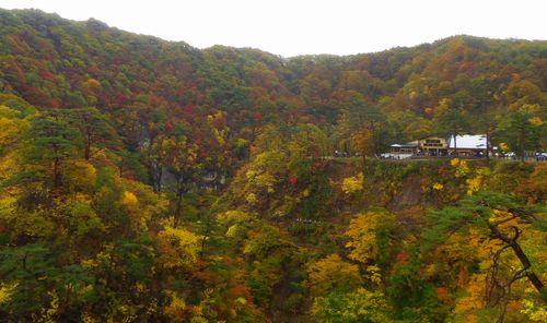 紅葉2012鳴子峡7大深沢橋からの眺望