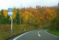 国道398号紅葉の花山峠15