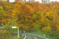 国道398号紅葉の花山峠17板井沢橋