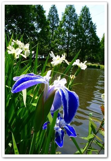 2011-05-25 川越水上公園 018