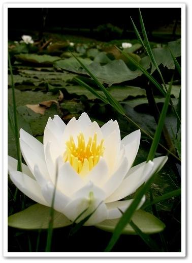 2011-06-01 荒川CR鴻巣 046