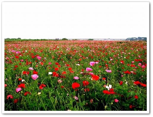 2011-06-01 荒川CR鴻巣 029