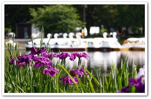 2011-06-08 川越水上公園 004