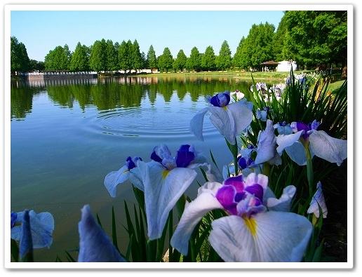 2011-06-22 川越水上公園 004