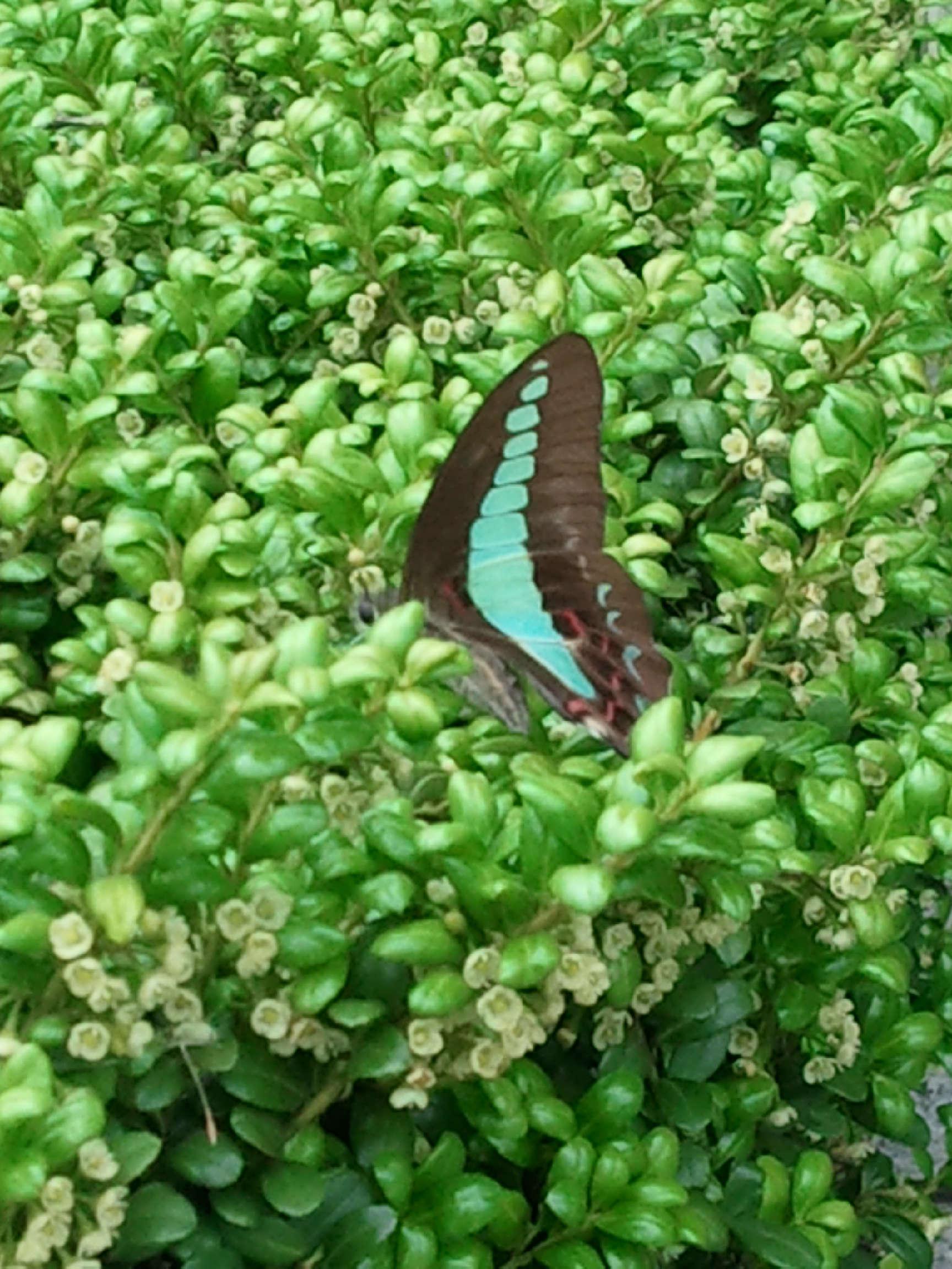 蝶の写真2