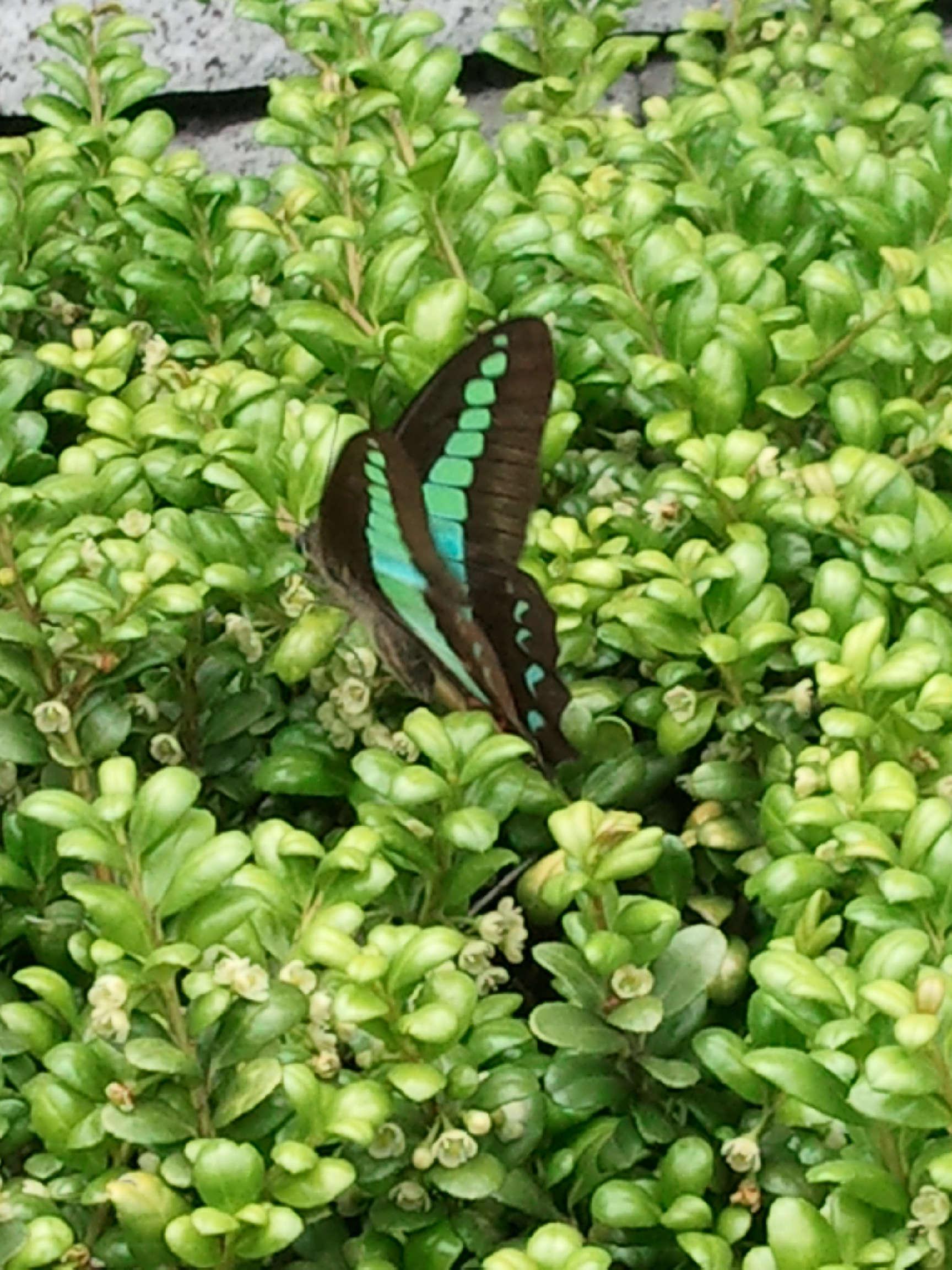 蝶の写真1