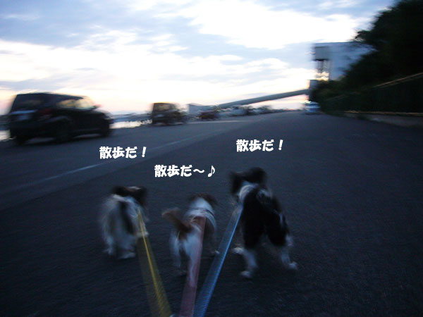 P1100874.jpg