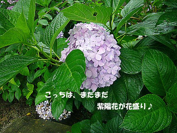 P1110270.jpg