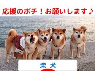 2_20120428073944.jpg