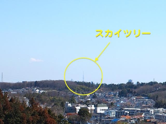 P3135446.jpg
