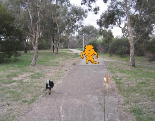 kangaroo encounter image 1 small
