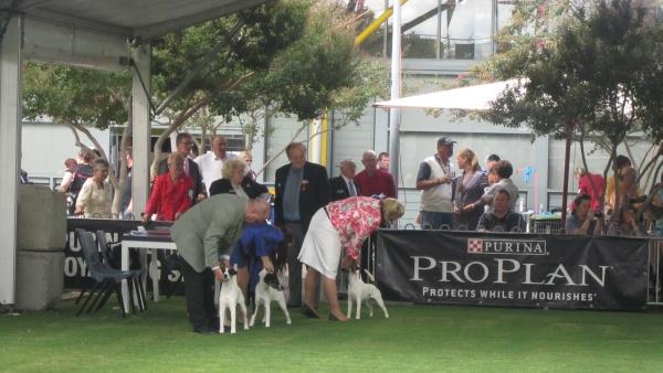 dog show in Sydney 092 blog