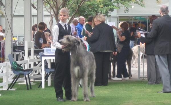 dog show in Sydney 086 blog2