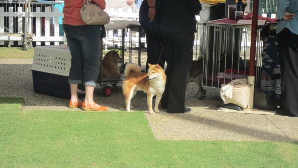 dog show in Sydney 110 blog