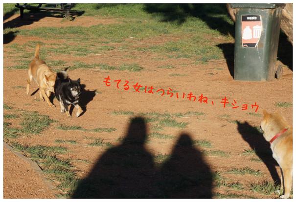 dog g3-2012
