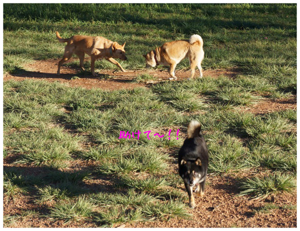 dog g2-2012