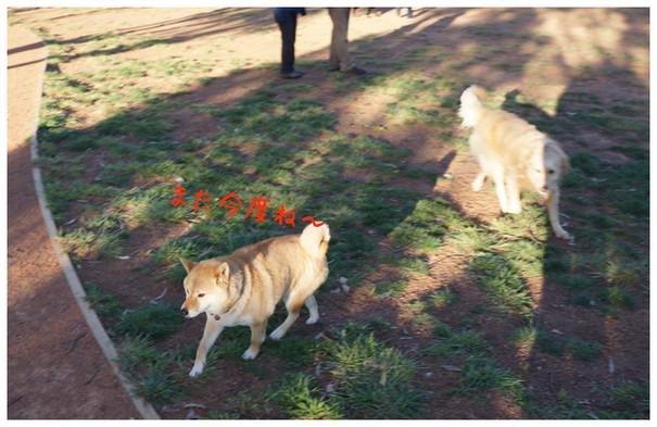 dog g1-20012