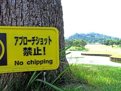Golf RIMG1043 02 470