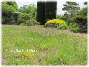 芝生の花畑