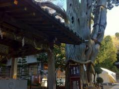 白浜神社 004