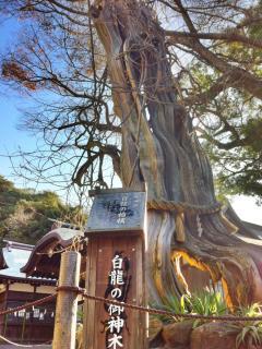 白浜神社 007