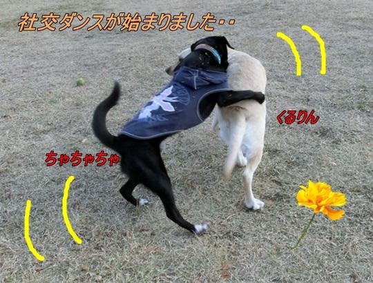 CIMG6039.jpg