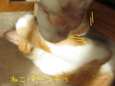 しゅびっ=3