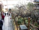 湯島天神201201その2