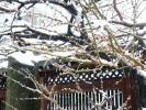 湯島天神201202その6