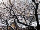 湯島天神201202その7