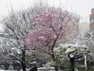 湯島天神201202その11