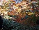 剡渓流の紅葉1