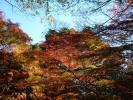 剡渓流の紅葉2