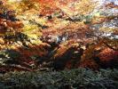 剡渓流の紅葉3