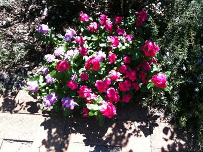 この花なんて花
