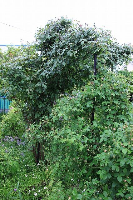 IMG_5439あっちゃんのお庭