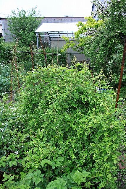 IMG_5441あっちゃんのお庭