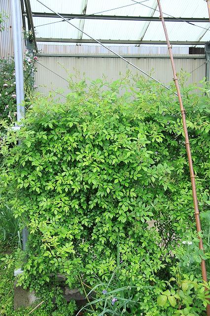IMG_5444あっちゃんのお庭