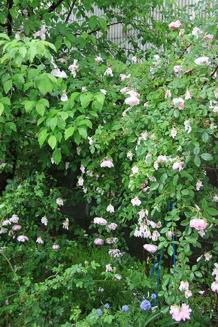 IMG_5453あっちゃんのお庭