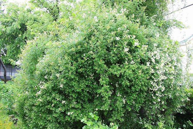 IMG_5469あっちゃんのお庭