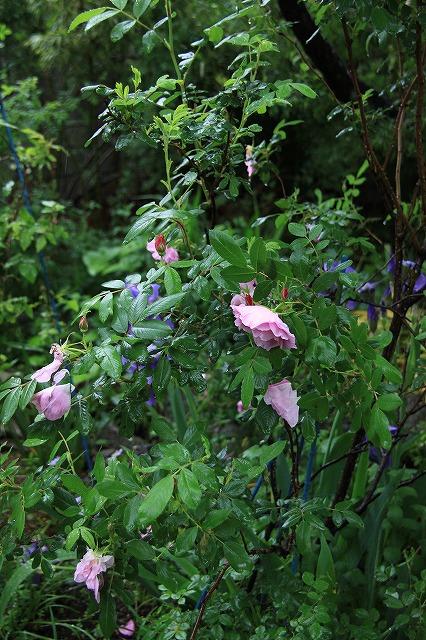 IMG_5475あっちゃんのお庭