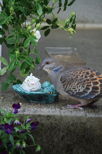IMG_5518あっちゃんのお庭